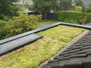 dakdekker wierden ook voor groendaken